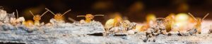 termitepestcontrol brisbane