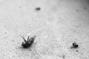 are termite treatments safe