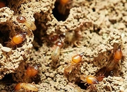 best termite treatment brisbane
