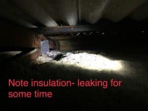 Termite Pest Control Brisbane
